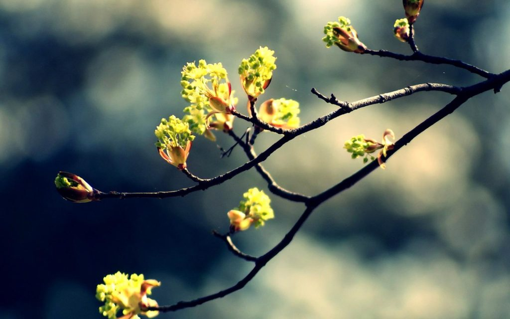 Spring-is-coming-HD-Wallpaper-1680x1050 - Giordanos