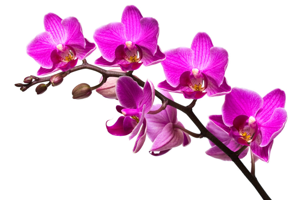 tips for orchid care, Beautiful flower