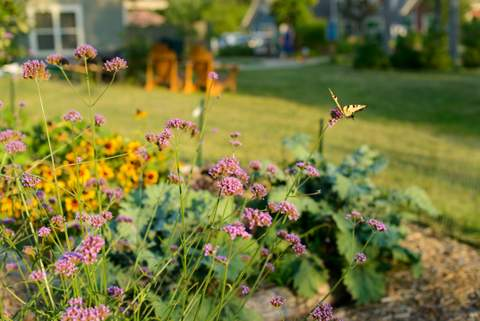 Summer-Vegetable-Garden