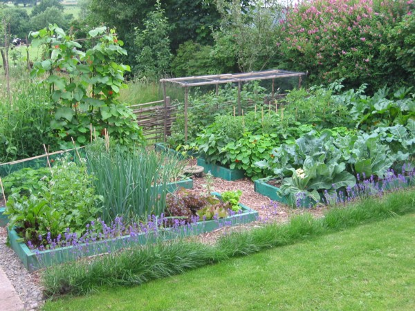permaculture-garden-reduced