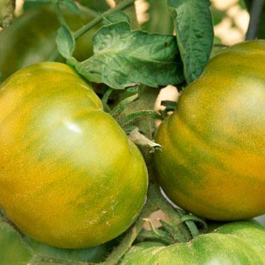 tomato-tips-6