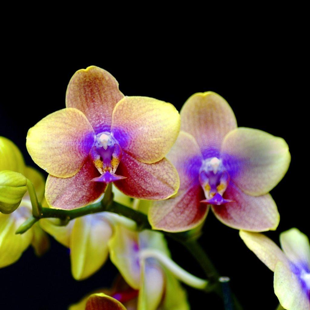orchids_003