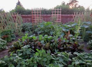 crowded-garden